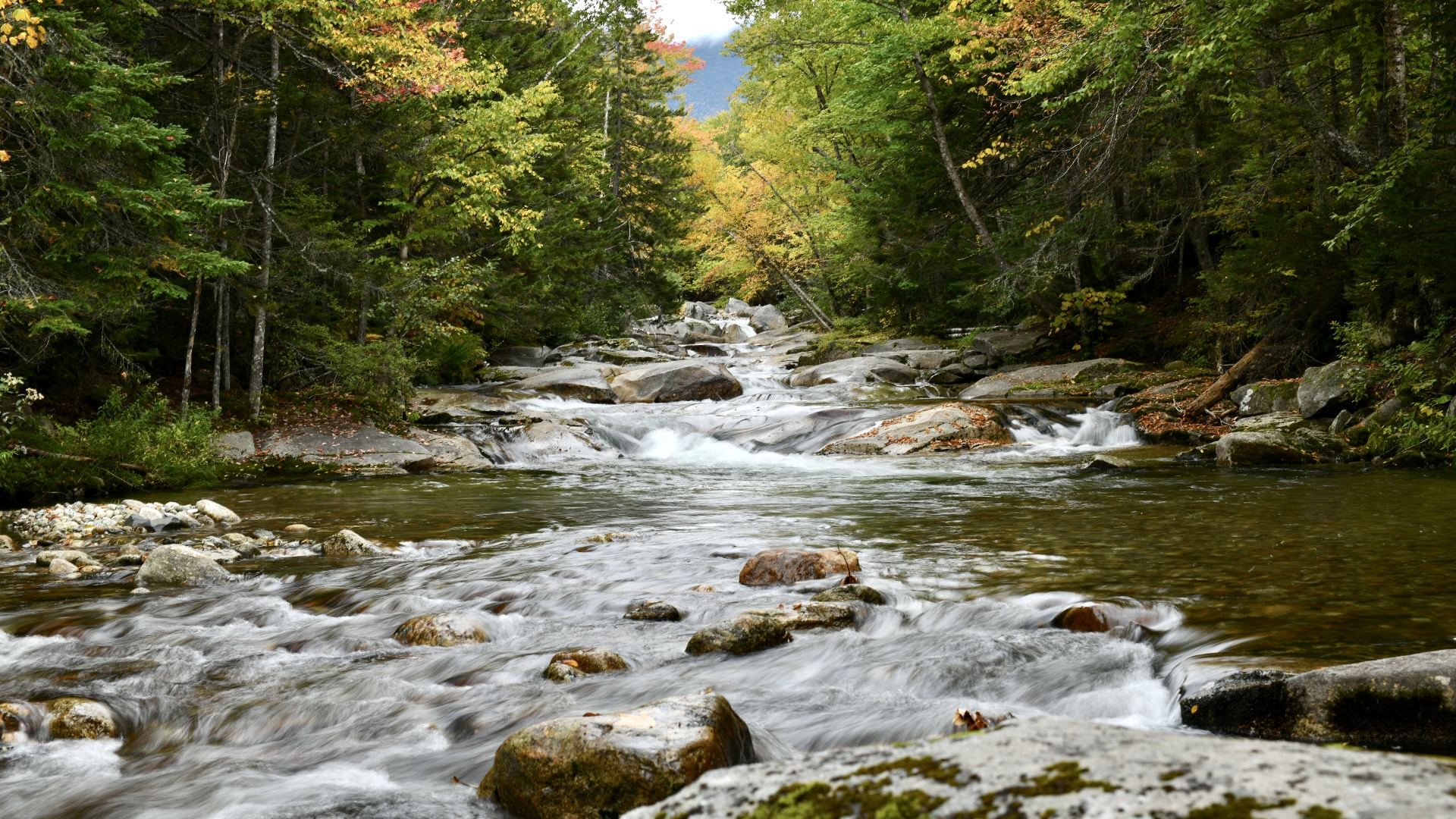 River flowing directly toward viewer in center of image. River lined with autumn trees. Yellows, oranges, greens. 2021. Taryn Okesson. Digital Photography. White Mountain National Forest, New Hampshire.