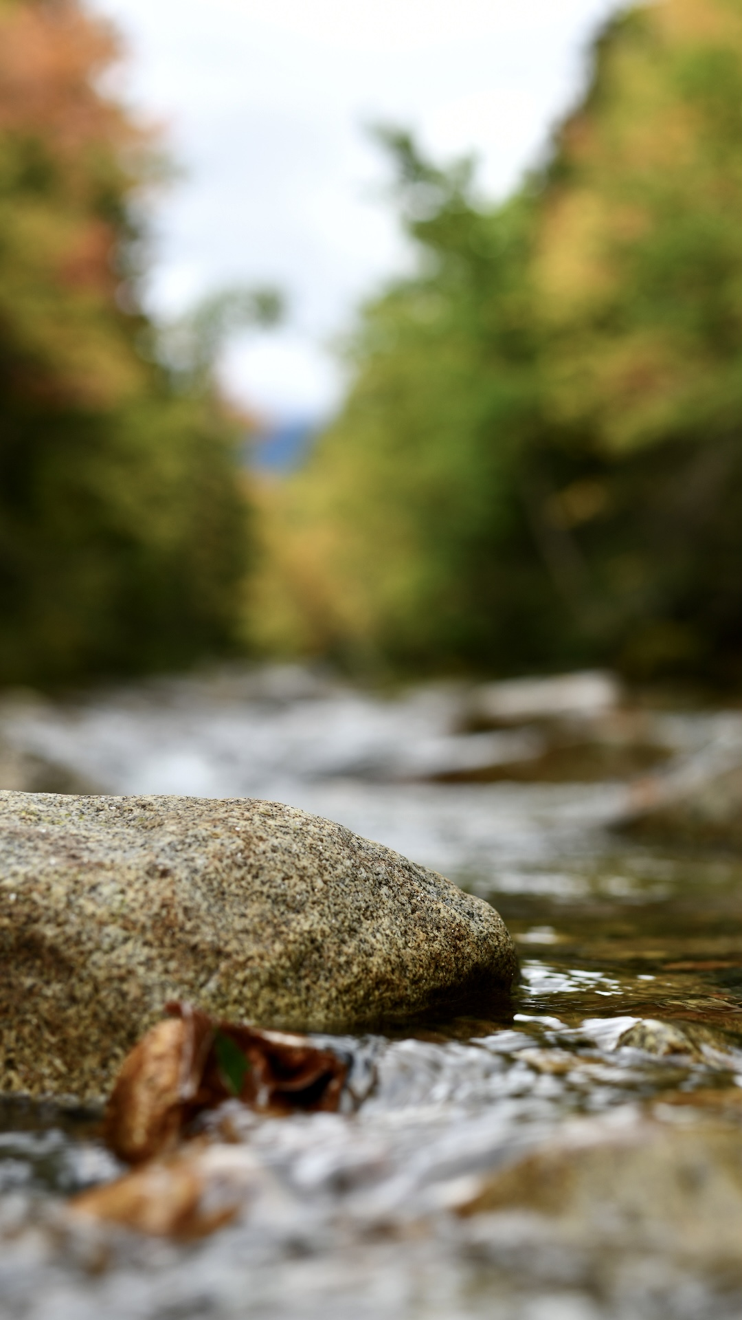 One river rock in focus. 2021. Taryn Okesson. Digital Photography. White Mountain National Forest, New Hampshire.
