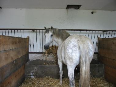 Lehrmeister Pferd