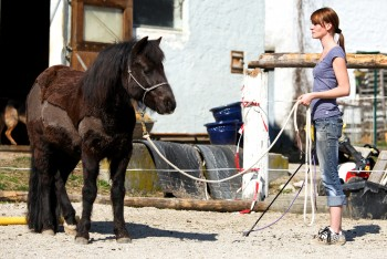 Natural Horsemanship, Clickertraining