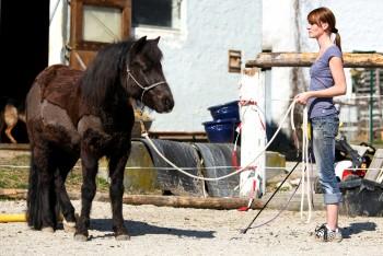 Natural Horsemanship, Clickertraining