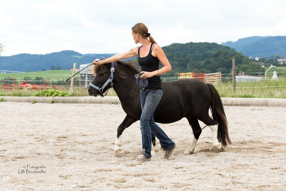 Farben und ihre Wirkung auf unsere Pferde
