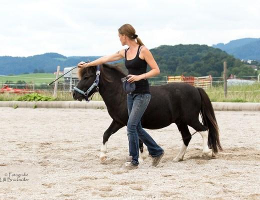 Farbtherapie Pferde