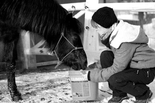 Immunsystem Pferde