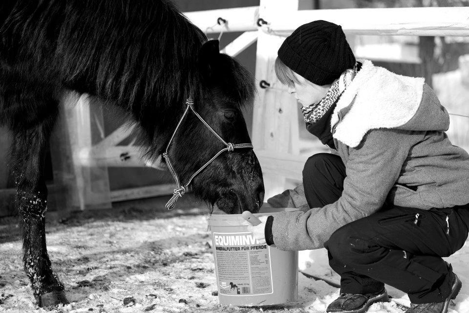 Das Immunsystem des Pferdes: Was man wissen sollte!