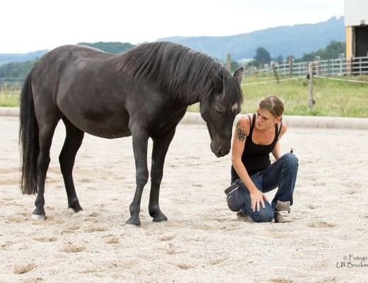 Feine Hilfen im Pferdetraining