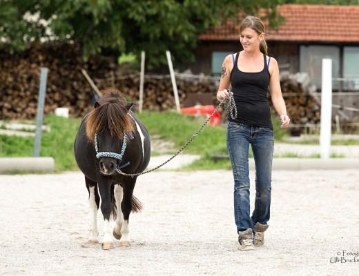 Unsicherheit im Pferd auflösen