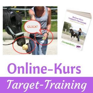 Umfangreicher Kurs zur Freiarbeit, Target, Clickertraining
