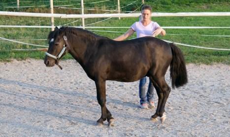 Freier Tanz mit dem Pferd