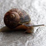 Snail_02