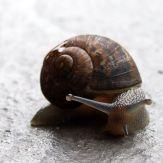 Snail_03