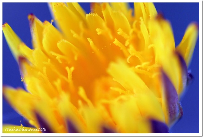 Day 47 - Yellow on Blue