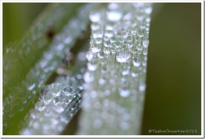 Day 106 - Dew on Grass
