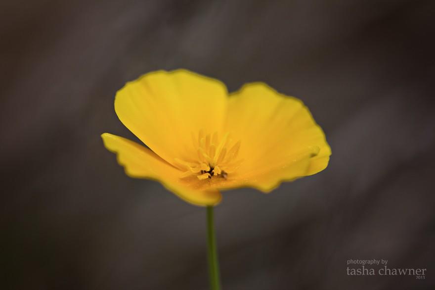 YellowFlower2