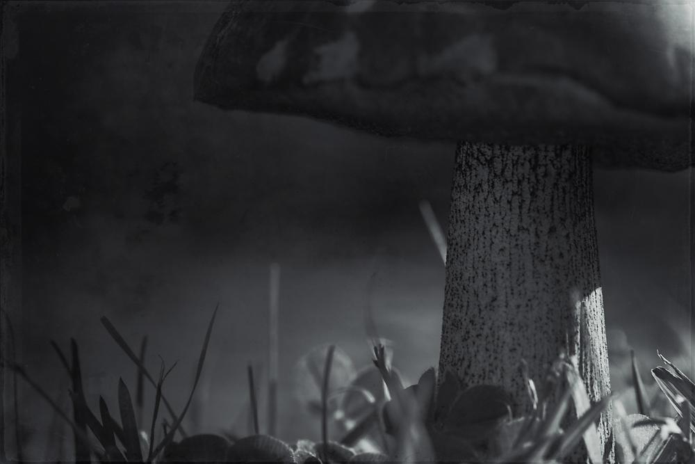 mushroom-1