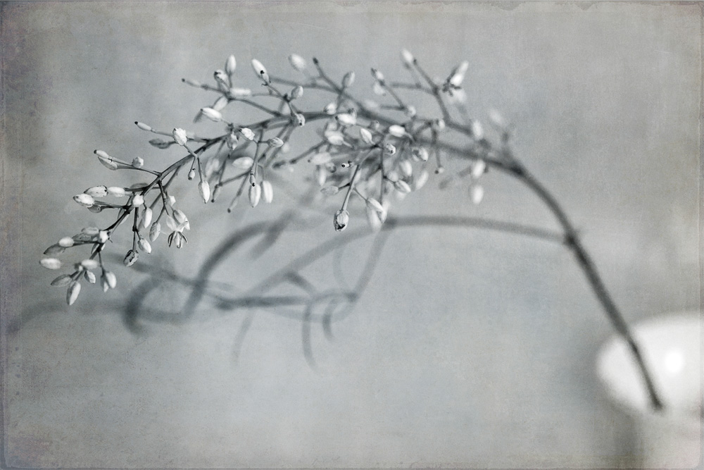 tasha-chawner-wordless-wednesday-still-life