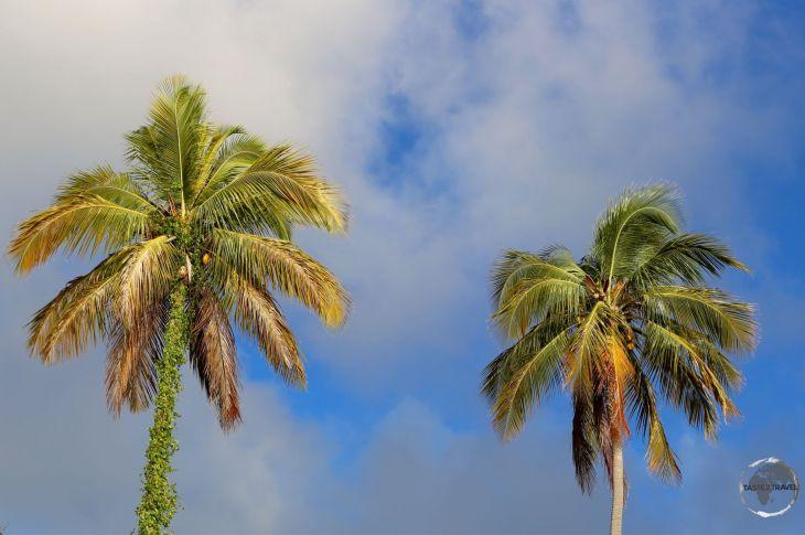 Palm Trees at sunset, Brewers Bay, Tortola Island, BVI.