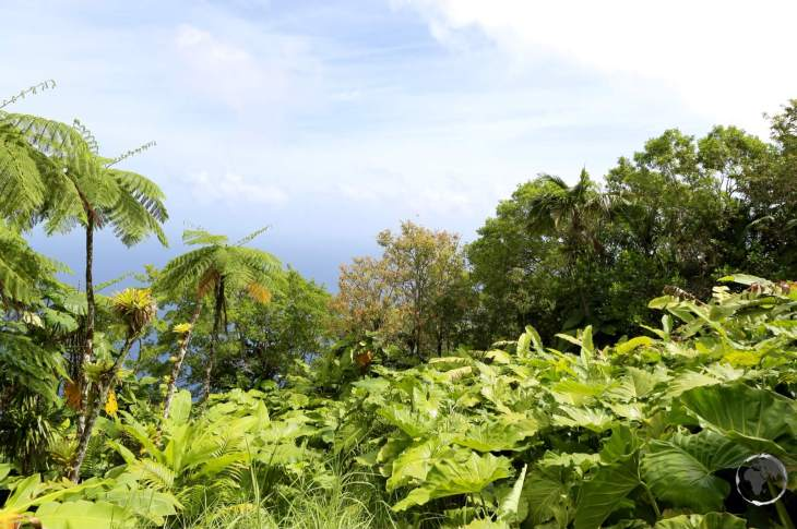 Hiking trail on Saba