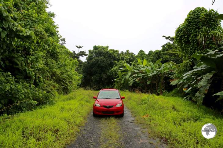 Touring the forested interior of Kosrae with Carlos.