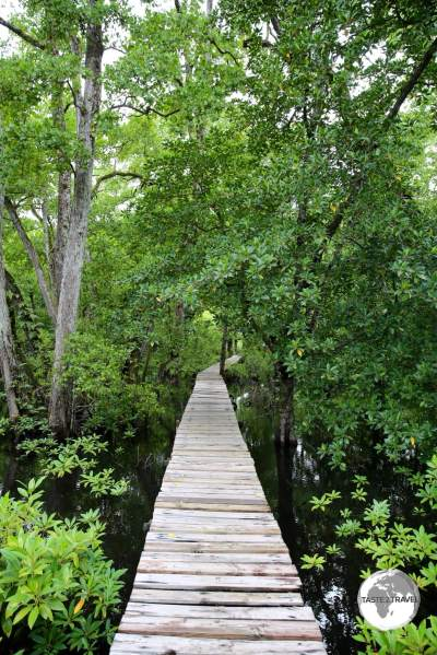 The mangrove walkway at the Pacific Tree Lodge resort.