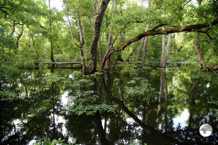 The sprawling mangrove swamp at Pacific Treelodge Resort.