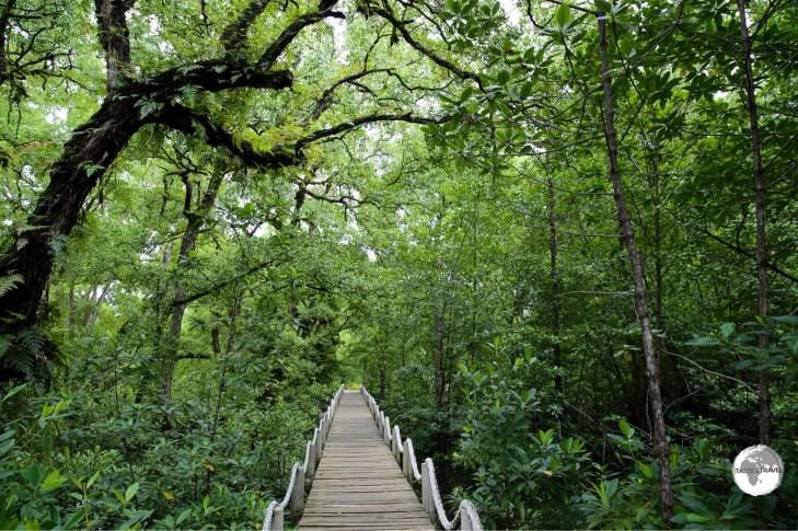 Mangrove walkway at the Pacific Tree-lodge resort.