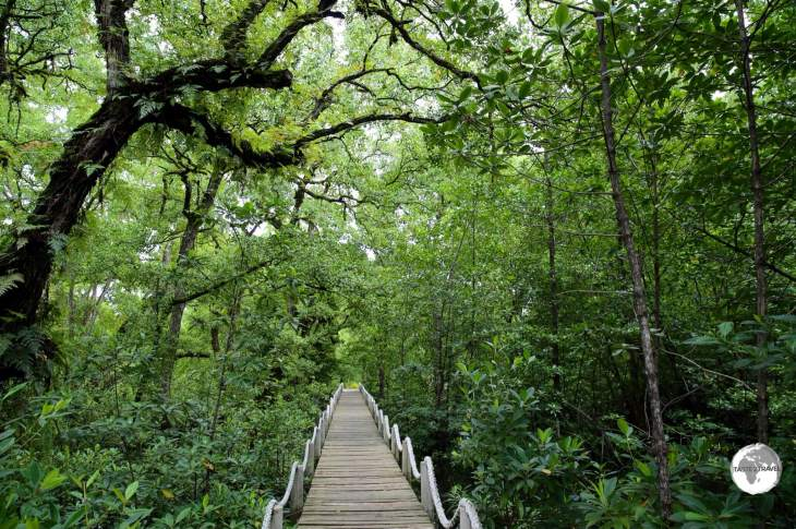 Pathway through the mangrove to Bully's Bar.