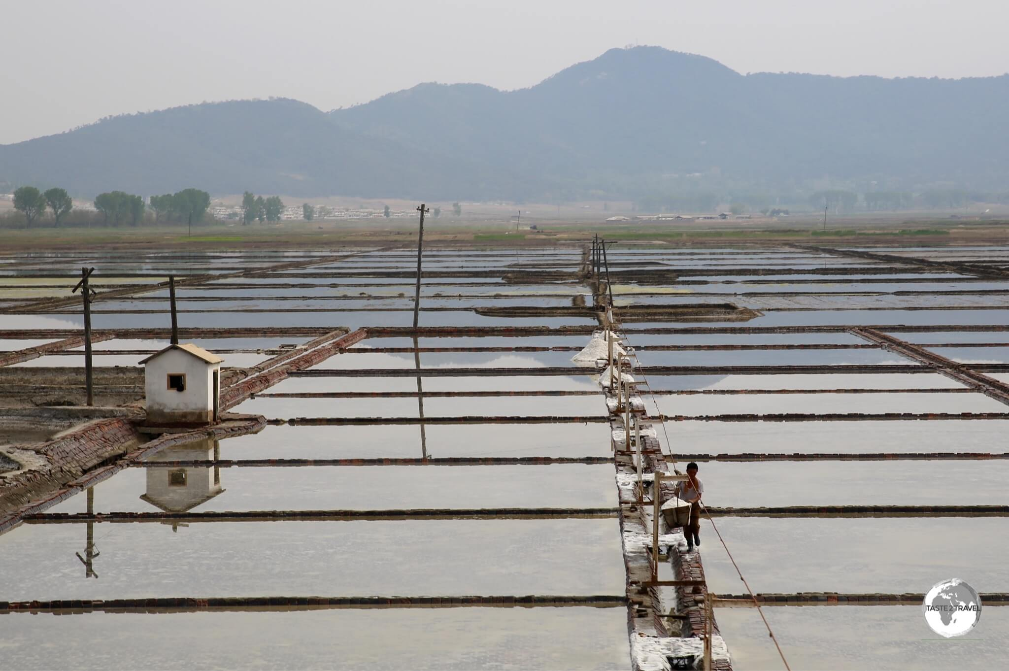 Rice cultivation is extensive throughout DPRK. These paddies are located near to Nampo.