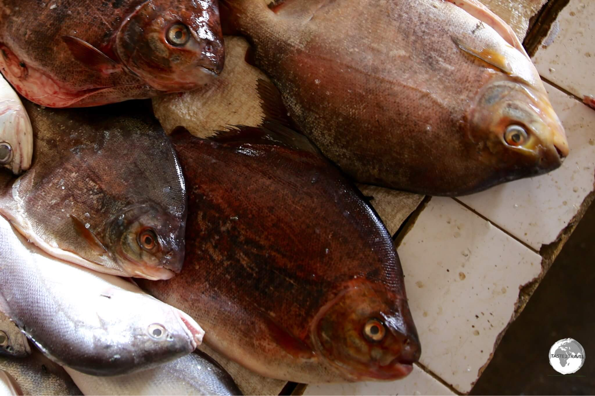 Fresh-water Pacu fish on sale at Bartica market.