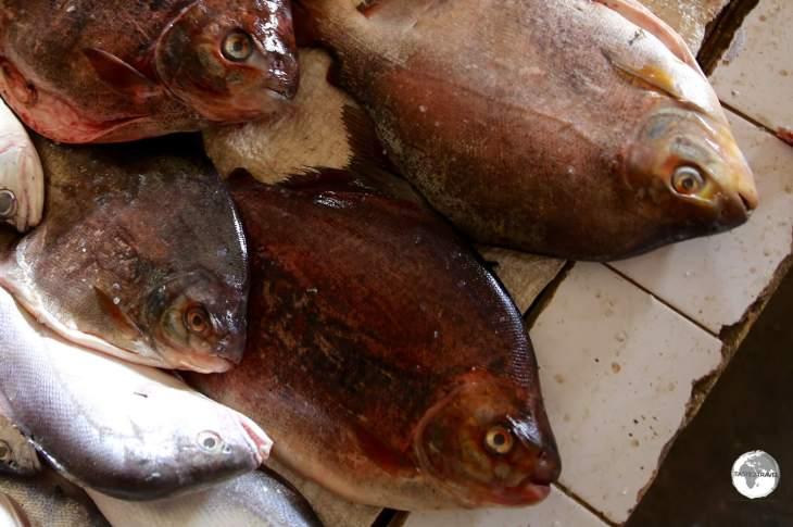Piranha Caju fish, from the Essequibo river, on sale at Bartika market.