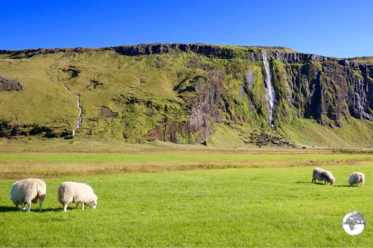 No mass food production in Iceland.