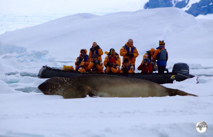 A Zodiac provides a sense of scale for this huge female Southern Elephant seal in Crystal sound.