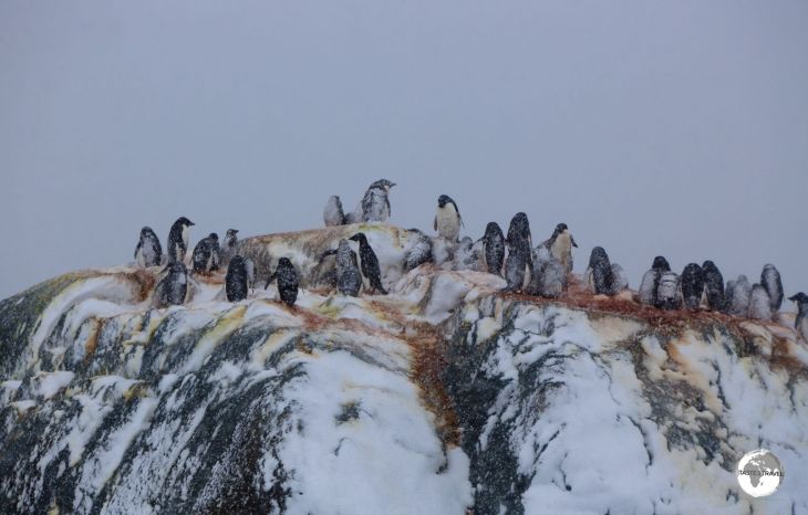Small in area, the Yalour Islands are comprised of many small rocky, igneous islets which are home to numerous Adélie penguin breeding colonies.