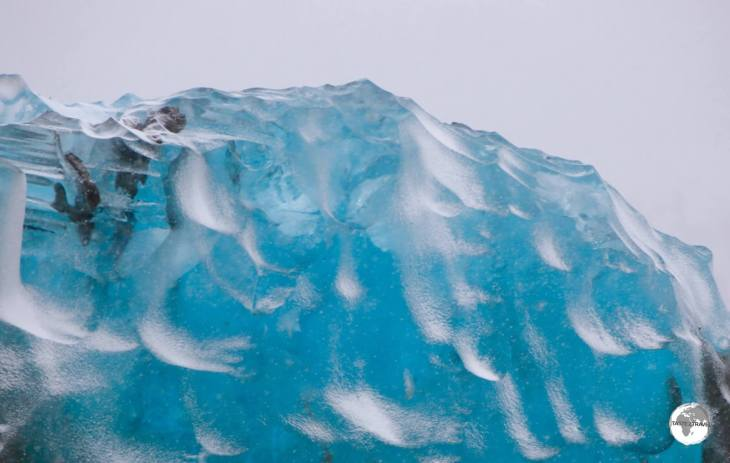 The translucent blue of a large chunk of pure water glacial ice floating in Crystal Sound.