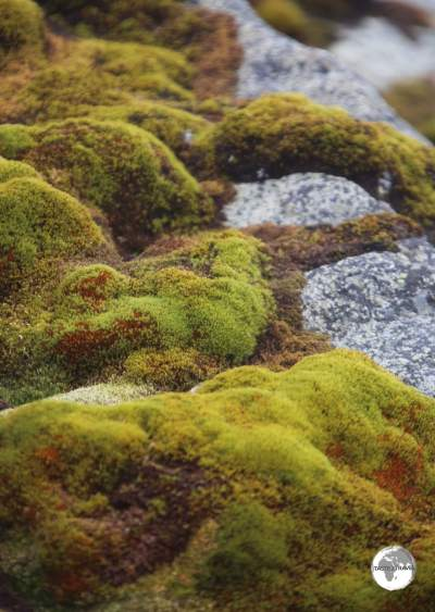 A rare sight in this frozen, white land - green moss covers the ground at Base Brown, in Paradise bay.