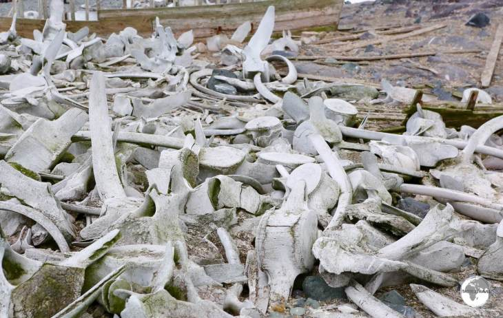 Discarded whale bones litter the beach on D'Hainaut Island.