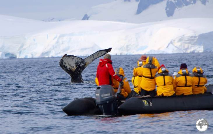 Getting up close! The whale watching at Wilhelmina Bay was spectacular - yet another incredible moment in Antarctica.