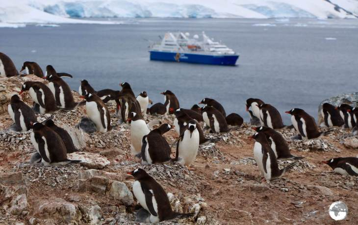 The Gentoo penguin colony on Cuverville island with our Antarctic home - the 'Ocean Diamond' - moored in the Errera Channel.