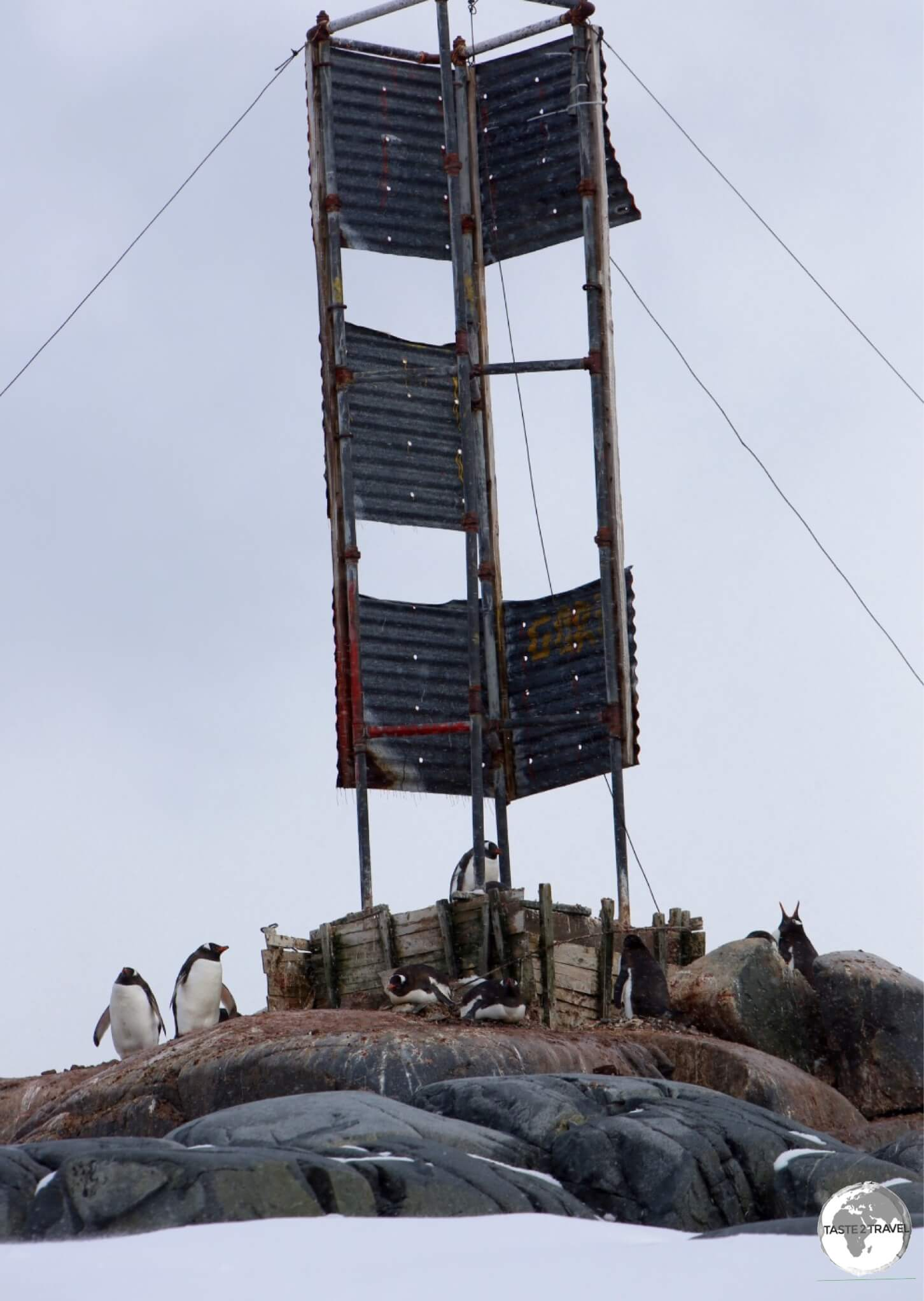 Gentoo penguins have established a small breeding colony around a marker on a rocky island offshore from Damoy point.