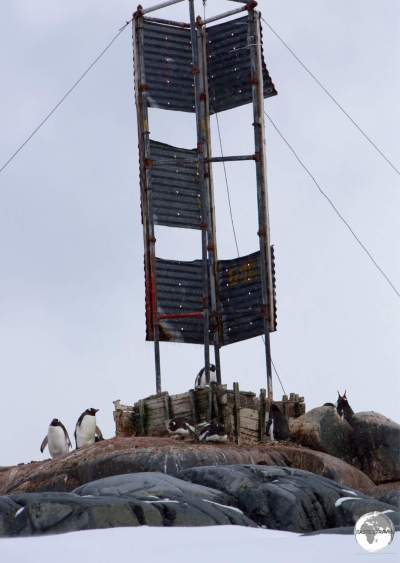 Gentoo penguins have established a small breeding colony around a marker on Casabianca Island, which lies 1 km offshore from Damoy point.