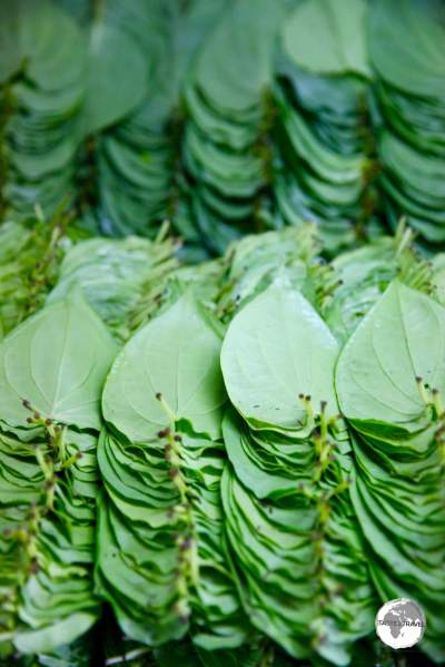 The preferred wrapper for Areca nut, Betel leaf on sale at the central market in Malé.