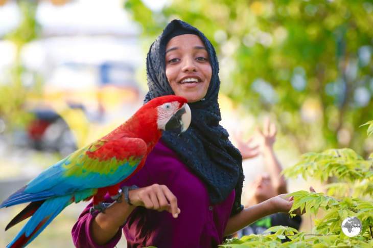 A long way from home - a pet Macaw being taken for a walk on Maafushi Island.