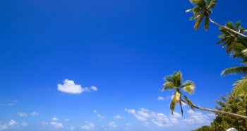 Tuvalu Travel Guide: Palm trees on Funafuti.