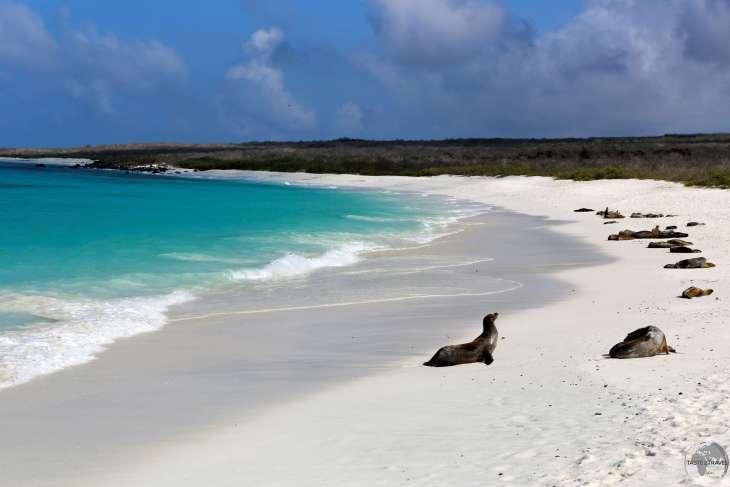Galápagos Islands Travel Guide: As pure as it gets - the stunningly pristine Gardener Bay on Española Island.