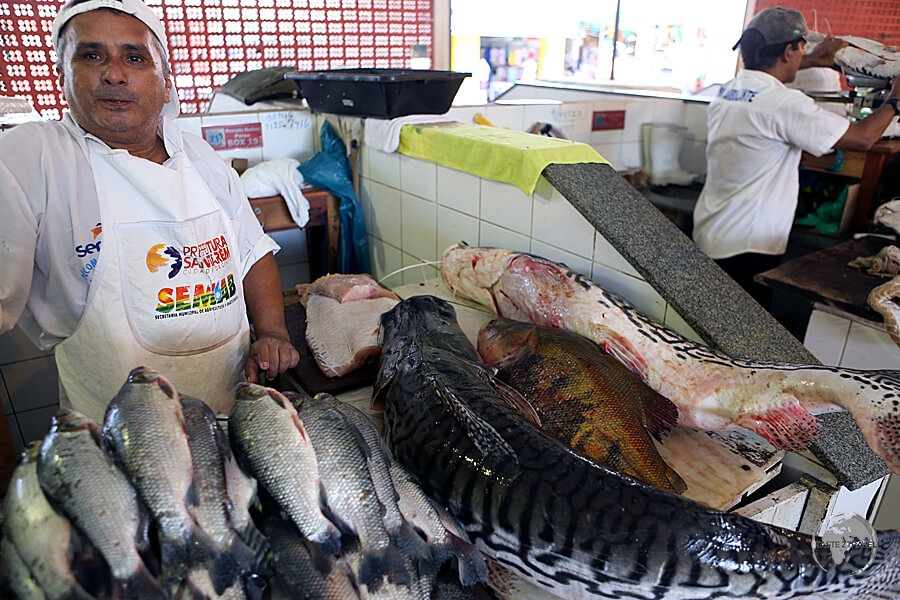Different species of Amazon fish can be seen at the Mercado Modelo in downtown Santarém.