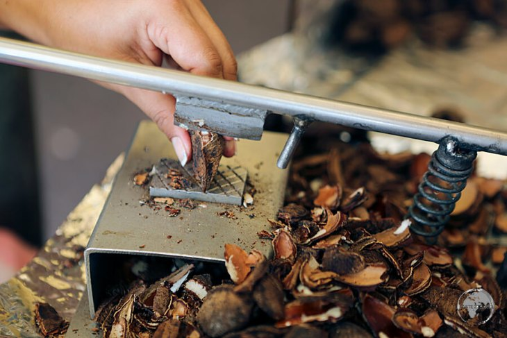 A nut trader at the Ver-o-Peso market in Belém, shelling Brazil nuts using a small guillotine.