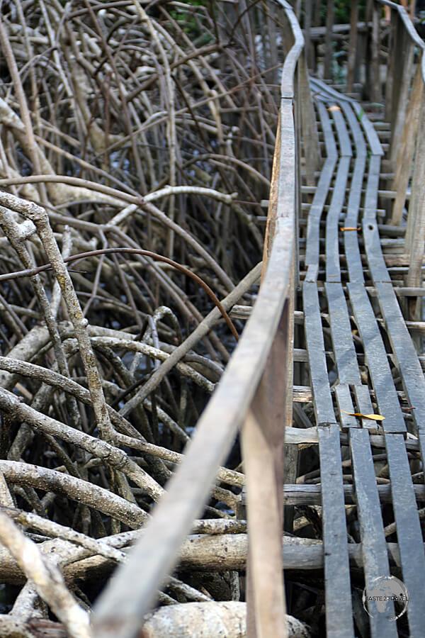 A boardwalk at São Jerônimo Farm on Marajó Island allows you to explore the extensive mangrove swamp.