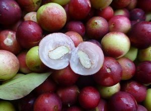 Camu Camu - an Amazonian super fruit.
