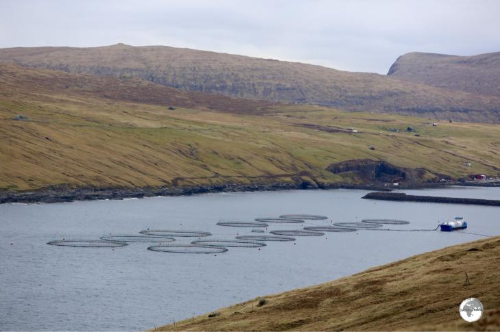 No shortage of fresh Atlantic Salmon in the Faroe Islands.