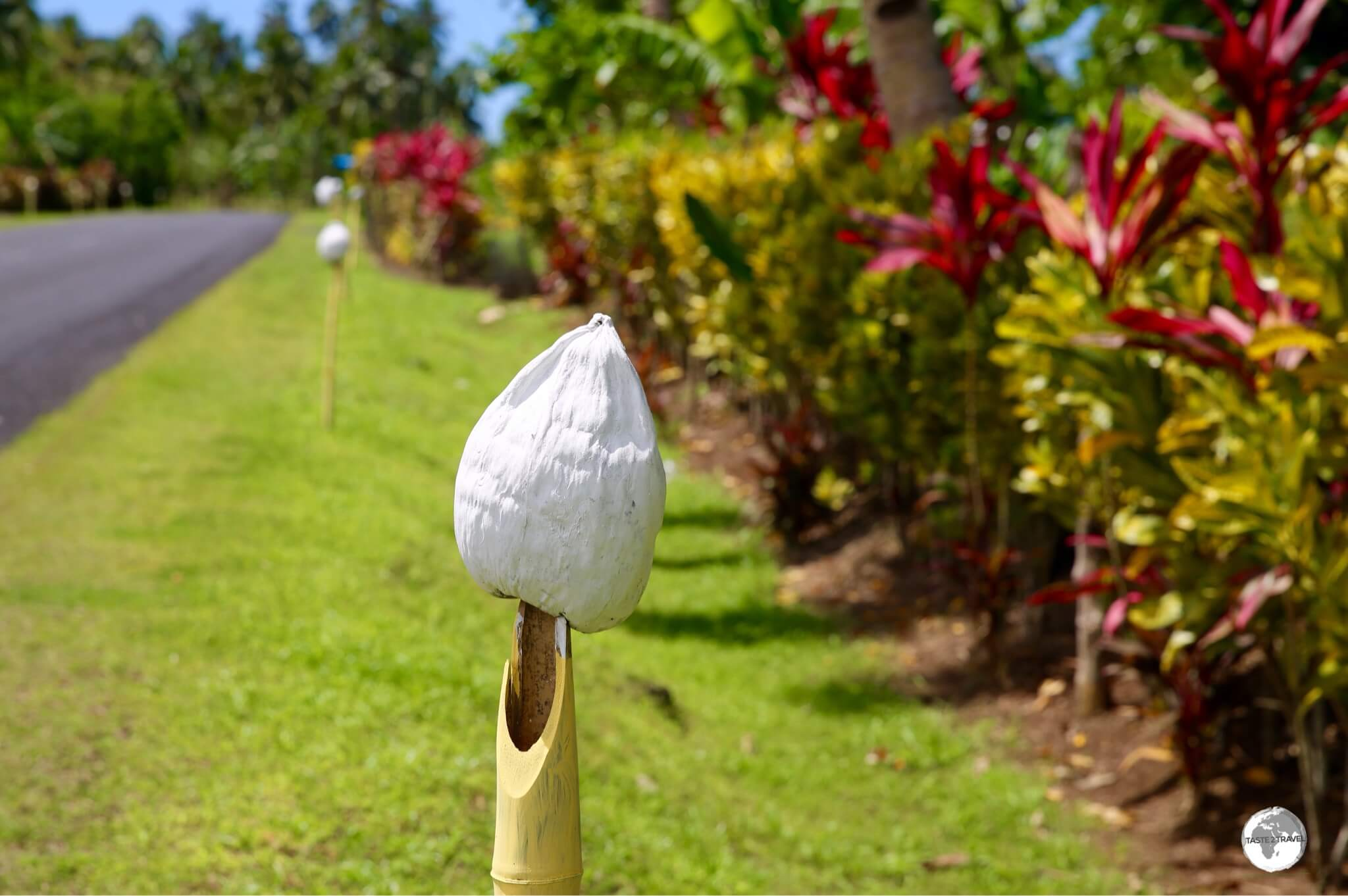 Painted coconuts stand like sentinels along the roadside through a village on Upolu island.